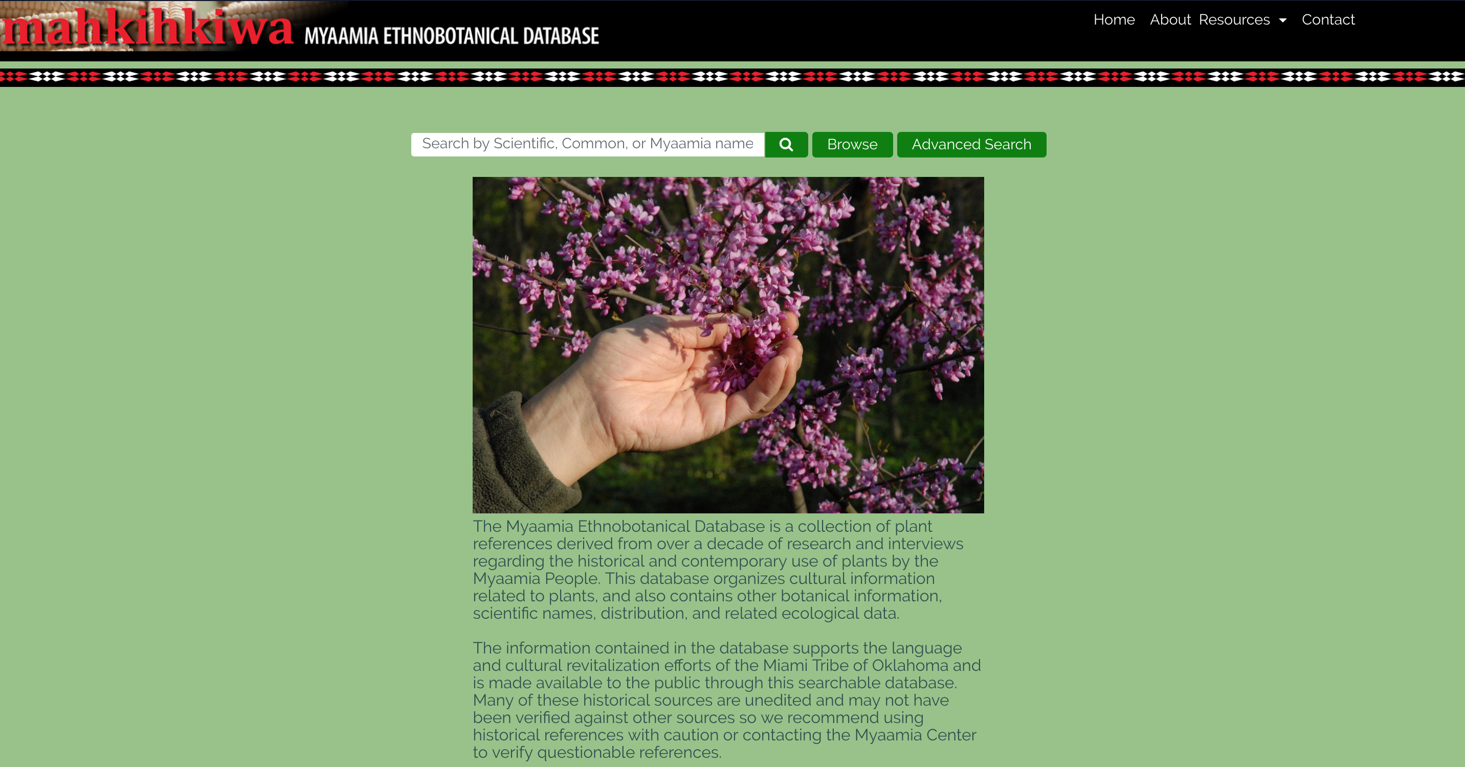 "Homepage of the EDB database with the Mahkihkiwa header at the top left, along with various menu buttons  on the top right.  In the center of the page is an image of a hand holding leaves of a purple branch. Above this image is a search bar with a search button next to it, and a ""Browse"" and ""Advanced Search"" button. Below the image, is a description of the EDB."